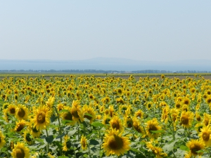 цветы на полях кучугур